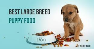 20 Best Large Breed Puppy Foods In 2019 Feedfond