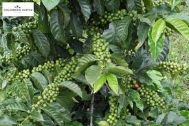 Colombian coffee facts + brewing tips + coffee beans + coffee gear. No 1 Premium Private Label Coffee International Coffee Factory