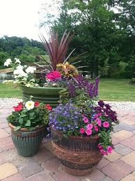 Small Picture Best 25 Plants around pool ideas on Pinterest Landscaping