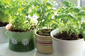 Love To Live In Pensacola Florida Starting An Herb Garden In FLContainer Herb Garden Plans