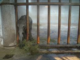 Zimbabwe's Reported Plan to Export <b>Baby Elephants</b> Raises Outcry ...