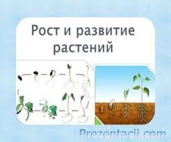 порожденные растения тест по теме рост и развитие растений  культуры купить комнатные растения через форум в крыму произведения о комнатных растениях тайга уссурийская растения и животные реферат на тему растение