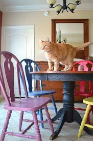colorful kitchen coloured chairs round dining table cat