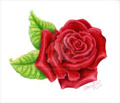 Image result for images of small rose