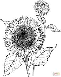 Small Picture Sunflower coloring pages Free Coloring Pages