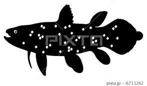 シーラカンス 魚 シルエット 古代魚のイラスト素材 Pixta