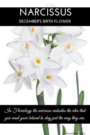 narcissus birth flower some months have more than one narcissus birth flower some months have more than one flower