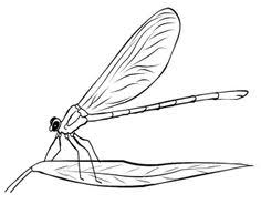 Small Picture Dragonfly Coloring Book Pages Kids Coloring Pages Pinterest