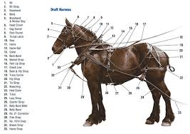 my draft horse super store harness diagram draft work harness horse harness for sale at Horse Harness