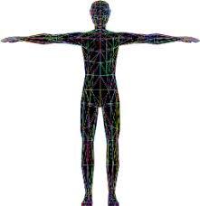 Biology for Kids: <b>Human Body</b>