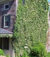 Whether built of masonry or wood, old buildings will likely suffer from  being covered with vegetation. Ivy and some vines can become a ...