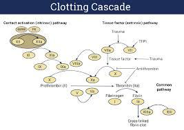 Blood Clotting Chart Coagulation Cascade Ppt Blood