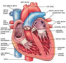 Znalezione obrazy dla zapytania serce