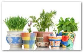 indoor gardening. Indoor Vegetable Gardening