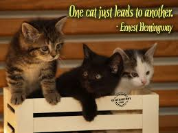 Funny Cat Pictures With Quotes Funny Cat Picture Cat Pictures With