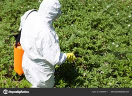 farmer spraying toxic pesticide insecticide vegetable garden stock photo