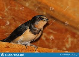 There`s a fly in my beak stock photo. Image of eating - 141574668