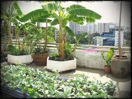 Roof Garden Design Ideas Outdoor Adolfo Harrison Rooftop Residential Garden Notting