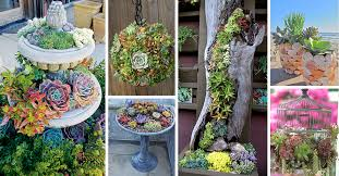 small succulent garden succulent garden picking the top plants for great look home decor studio