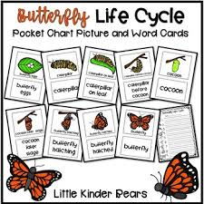 Butterfly Life Cycle Pocket Chart Picture And Word Cards