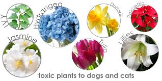 toxic plants