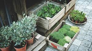 5 places to plants if you live in mississauga