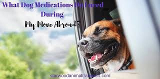 what dog cations do i need to bring