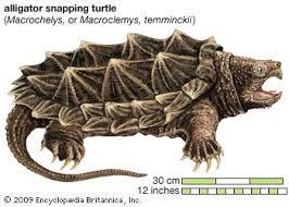 Turtles Of Missouri Missouris Natural Heritage
