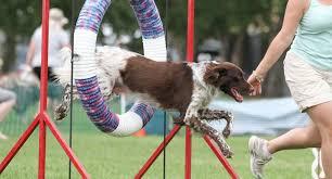 dog training insurance pet behaviourists insurance business public liability