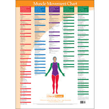 Muscle Action Chart Trigger Point Charts 5 Chart Set Kent Health Systems