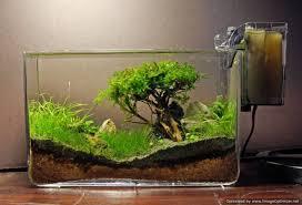 How to grow : Moss trees - YouTube