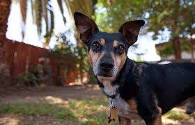 Lymphoma In Dogs Best Friends Animal Society