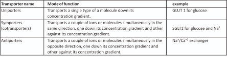 3 Types Of Passive Transport Transporters Faciliated Diffusion Of Uncharged Molecule
