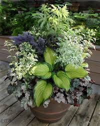 Shade Container Gardening Ideas  Great Combo For Shade Container Container Garden Ideas For Shade