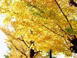 「晩秋の街」の画像検索結果