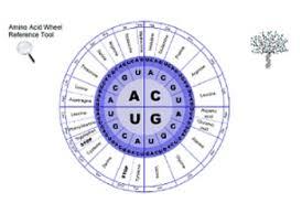 Amino Acid Chart Wheel And Chart