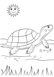 Small Picture Cartoon Turtle coloring page Free Printable Coloring Pages