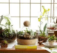 the 11 best plants to grow in your terrarium