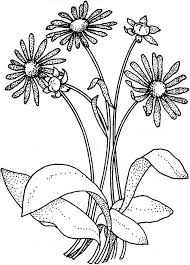Small Picture Coloring Pages Of Daisy Flowers Coloring Pages