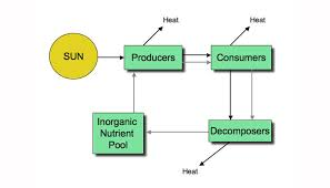 Producers And Consumers Venn Diagram Creek Ecosystem Inphographic By Mohammed Karimjee
