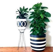 indoor ceramic plant pots tall indoor plant pots uk