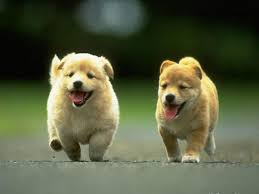 cute dogs and puppies wallpaper. Plain And With Cute Dogs And Puppies Wallpaper T