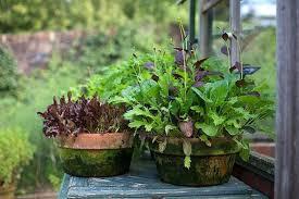 planning a vegetable garden rhs gardening