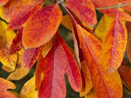 CoolSeason Gardening Tips How To Plant For Fall  FTD Fresh BlogFall Gardening