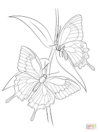 Small Picture butterflies a charming butterfly coloring page butterfly coloring
