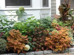 best interesting plant for shade gardens coleus