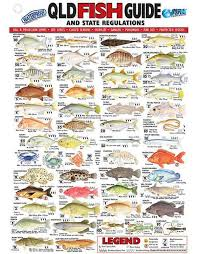 Australian Reef Fish Species Chart 54 Studious Sea Fish Identification Chart