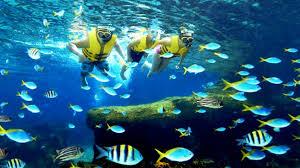 underwater water park. Visitors Snorkelling At Rainbow Reef Adventure Cove Waterpark™ Underwater Water Park L