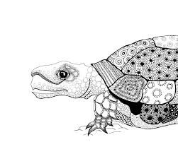 Small Picture turtle drawing Archives Eclectic Cycle