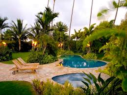 Small Picture palm trees garden design Google Search Garden Inspiration